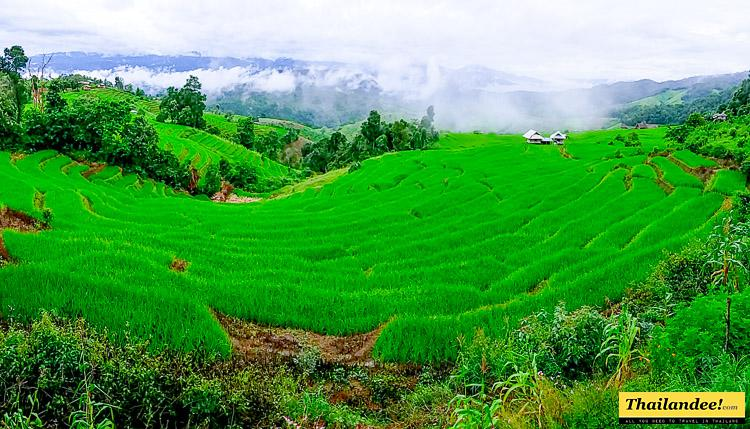 ban pa pong piang rice terraces thailand