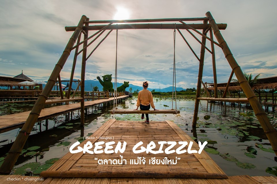 green grizzly chiang mai