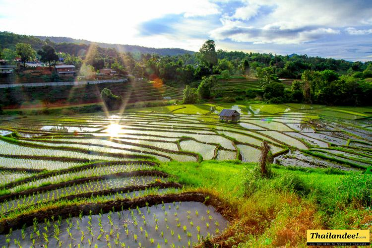 terraced rice fields Thailand
