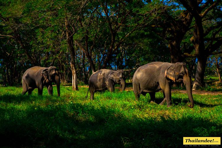 About The Elephant Valley Tour