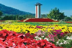phu ruea winter flowers festival