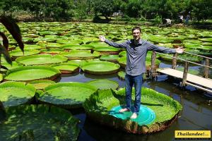 Giant Water lilies pond