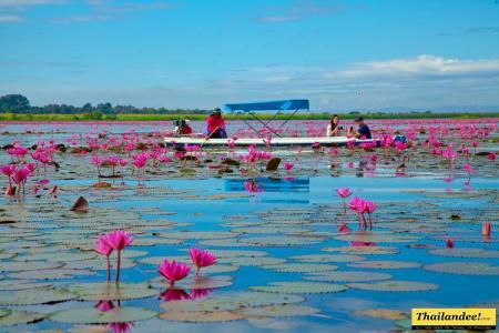Le lac aux lotus rouges Udon Thani